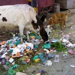 Ban plastic bags. Be sympathetic to animals: Supreme Court