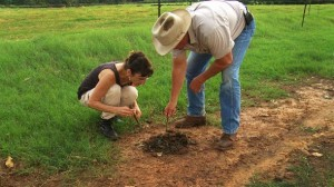 digging-for-dung-beetles-590x331