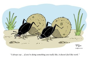 dung-beetles-cartoon_lores