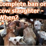 protect cows