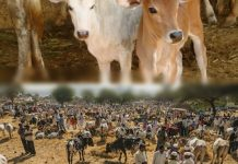 cow sale for slaughter banned