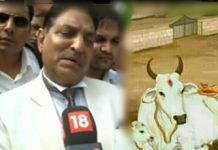 declare cow national animal, says high court justice