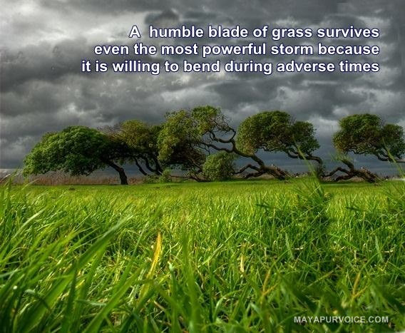 humility quote Mayapur Voice